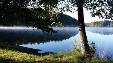 Relax Fox, easy guided nature walk 3 - 5km from Hotel Nuuksio 1.4.-15.11.